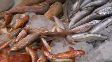 Seafood Market Fish and Fish Liver video