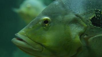 Fisch video