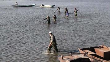 Teamwork von Fischern, die Teich ernten