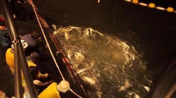 Fisch im Schleppnetz