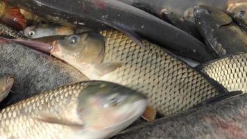 peixe de água doce