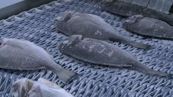 gefrorener Fisch auf Fabrikband