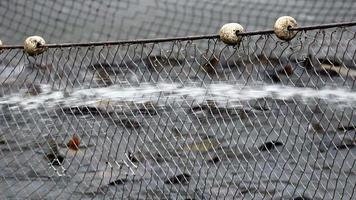 indústria pesqueira
