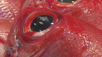 peixes exóticos recém pescados no mercado de peixes video