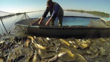 pesca professionale - pescatore che tira rete