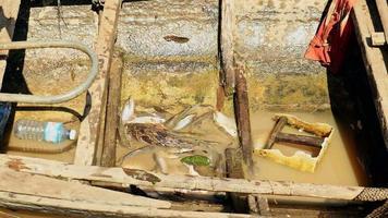 Pêcheur jetant ses prises de poisson dans l'eau boueuse cale au fond d'une pirogue en bois