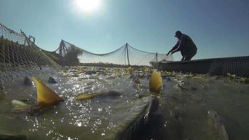pescatore che tira una rete da pesca video