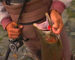 bc steelhead e carretel 01 video