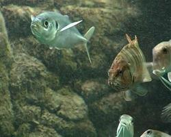 Meerwasseraquarium mit exotischen Fischen video