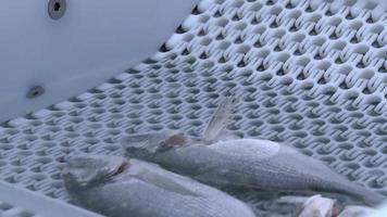 frischer Fisch und kaltes Wasser