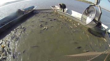 apparatuur voor het oogsten van vis