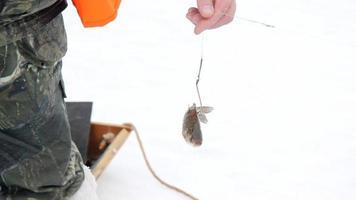 pêche sur glace video