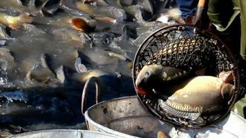 sorteren van vis