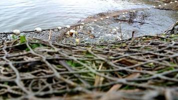 Fischernetz im Teich