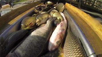 pesce fresco per il mercato