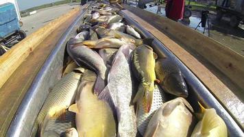 pescatori che scaricano le catture