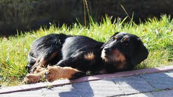 chien errant couché à côté de la route