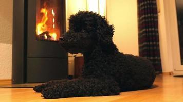 chien couché devant cheminée