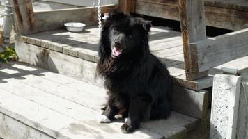 cachorro preto em uma corrente