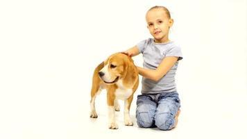 cucciolo di beagle con la ragazza sono in posa in studio video