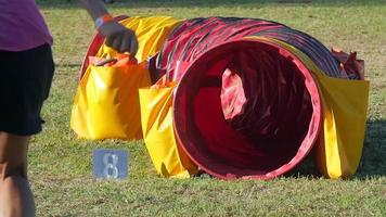Dog Agility Race, schwarzer Pudel in Aktion