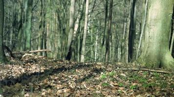 perros corriendo en el bosque