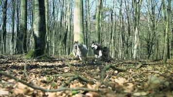 cani che corrono nella foresta