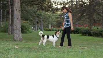 cachorro e seu dono video