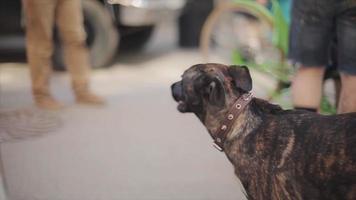 Ansicht des Stammbaumhundes gehen neben Mann, der Fahrrad mit vielen verschiedenen Details hält. Sommertag