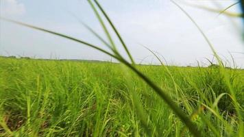 First-person view, an animal running on meadow grass video