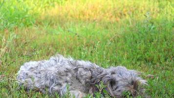 chien sans-abri adapté à la caméra video