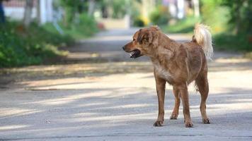chien de rue