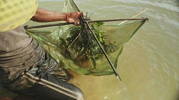 primo piano sulla rete di esca del pescatore di gamberi, lasciandola cadere e spingendola più in profondità nel fiume