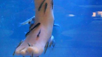 terapia del pesce video