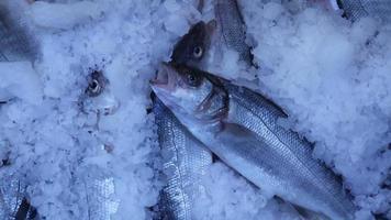 bazar del pesce