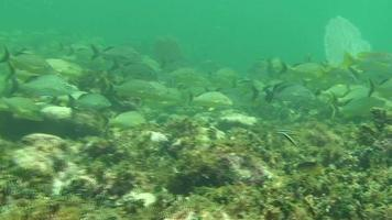 Tropical Reef Fish video