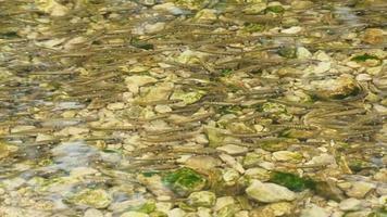 brodo di pesce