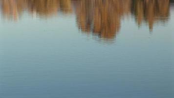 Fish pond video