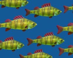 peixe flutuante