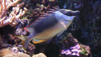 pez de coral video