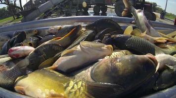 indústria pesqueira video
