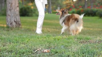 égayer votre chien