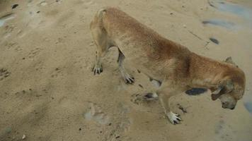 cane bagnato