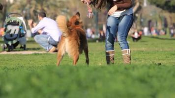 jugando al perro