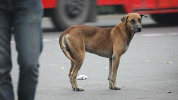 streunender Hund