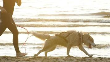 Female runner jogging with siberian husky dogs during the sunrise on beach