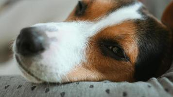 perro mirando a otro lado