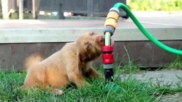lindo perrito bebiendo agua