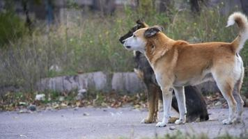 cães sem-teto na rua. câmera lenta