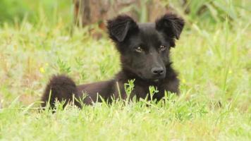 cachorro sem teto sentado na grama